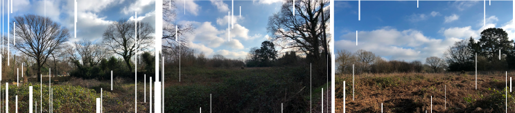 Tree Survey in Sussex | Encon Associates