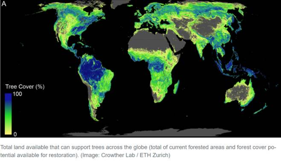 How Trees Could Save The Climate Pic 1
