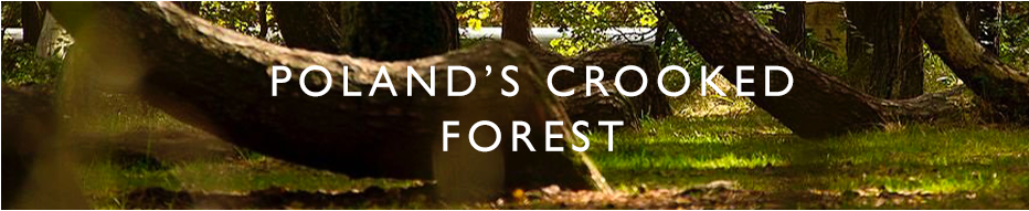 The Crooked Forest Header